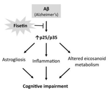 Natural plant compound prevents Alzheimer's disease in mice | KurzweilAI | Medicina integrativa | Scoop.it