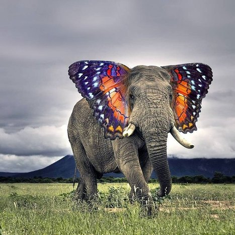 I'm Just Going to Leave these Photoshopped Animal Hybrids Here | I didn't know it was impossible.. and I did it :-) - No sabia que era imposible.. y lo hice :-) | Scoop.it