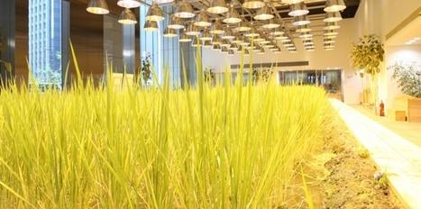 Produire ses légumes en ville : les propositions les plus folles | Eco-Development & Agro-Ecology | Scoop.it
