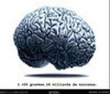 Notre cerveau serait totalement élastique! | CentPapiers | Neuroéducation | Scoop.it