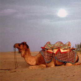 Rajasthan Desert Festival Tour Packages | India tour packages | Scoop.it