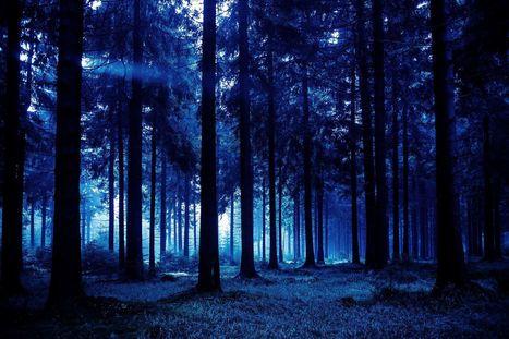 Les arbres aussi dorment la nuit ! | SoFrenchy | Scoop.it
