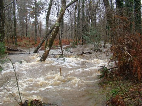 How wood in rivers affects flood risk | The River Management Blog | river flooding and management | Scoop.it