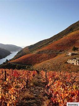 Vinho ultrapassa sol e mar como imagem do turismo português | Notícias escolhidas | Scoop.it