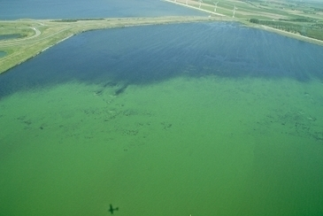 Rising CO2 levels will intensify algal blooms across the globe | Sustain Our Earth | Scoop.it