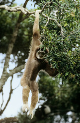 White-Bellied Spider Monkey Losing to $18 Billion of Oil - Bloomberg | Markets and Market Failure | Scoop.it