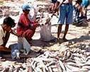 The Philippine aquaculture industry today | travail d'ocumentation | Scoop.it