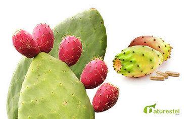 Opuntia Propiedades | Naturestel.com Productos Naturales | TUNA  Y  NOPAL | Scoop.it