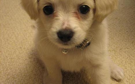 Il vostro cane è depresso? serve uno psicologo | Chic4Dog | Dog Style | Scoop.it