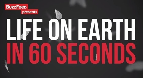 Watch 570 Million Years of Evolution on Earth in 60 Seconds | Music, Videos, Colours, Natural Health | Scoop.it
