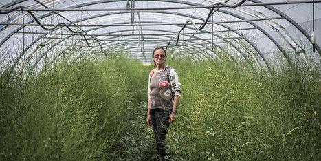 #CeuxQuiFont : Dans le Gard, une maraîchère bio prépare la relève | Pour une autre manière de consommer | Scoop.it