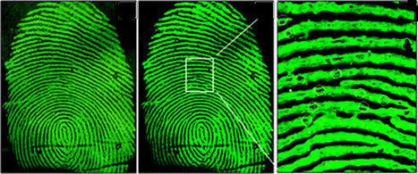 5,6 miljoen vingerafdrukken bij Amerikaanse overheid gestolen » datapanik.org   Privacy   Scoop.it