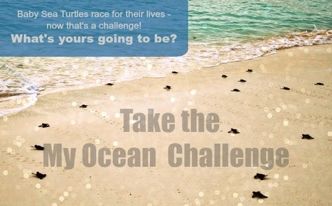 #Fundraise for the #Ocean ~ #ProjectAWARE go on #Rise2TheChallenge... | Rescue our Ocean's & it's species from Man's Pollution! | Scoop.it
