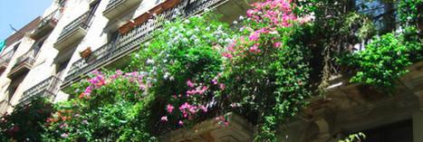 Comment faire de votre balcon un concentré de biodiversité | La HighLine de Cannes | Scoop.it