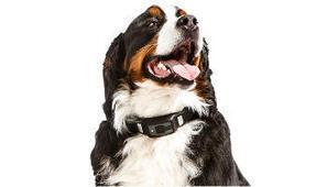 Voyce, le collier connecté pour surveiller la santé de son chien | Connected-Objects.fr | Innovation | Scoop.it