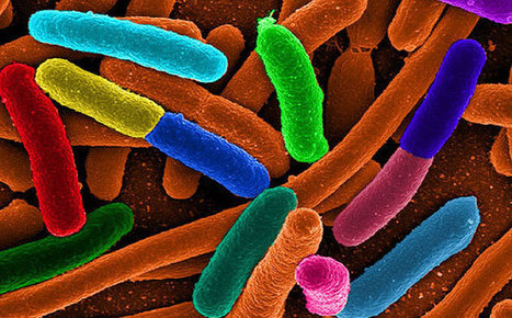 New Biosensors Turn Bacteria Into a Source of Natural Energy   S&TScan   Scoop.it