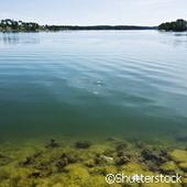 Les variations de températures renforcent le risque de proliférations algales | Toxique, soyons vigilant ! | Scoop.it