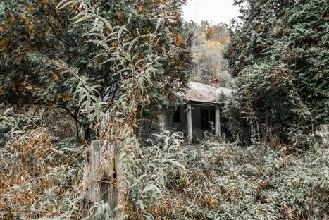Overgrown Kentucky home - Nate Castner   Exploration: Urban, Rural and Industrial   Scoop.it