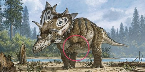 Scientists discovered something heartbreaking about this newfound dinosaur | Aux origines | Scoop.it