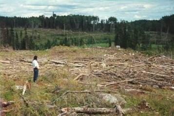 La deforestacion Causas y consecuencias Tala indiscriminada de arboles o bosques   LA DESFORESTACION DE ARBOLES   Scoop.it