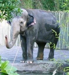 Save Elephants From Inhumane Confinement | practice | Scoop.it