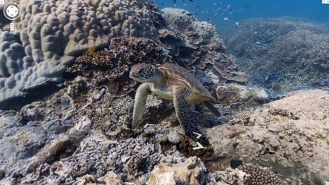 Street View goes underwater - Google sota el mar | TIG | Scoop.it