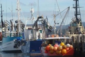 Commercial fishermen create new peak body to fight fisheries reform in ... - ABC - ABC Online | News on the World from a Nordic view | Scoop.it