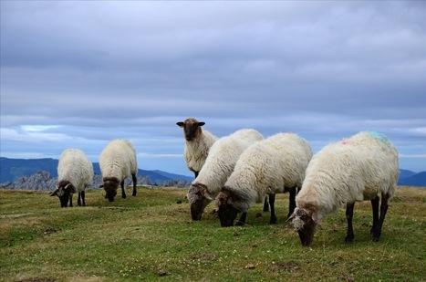 Quand l'Etat réprime les alternatives aux antibiotiques dans l'agriculture | Economie Responsable et Consommation Collaborative | Scoop.it