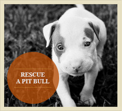 6 Reasons Why Pit Bulls Make Awesome Pets | PitBulls | animals on our planet | Scoop.it