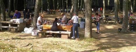 """El Pol"" - Arbúcies - Picnic - Merendero | Comarca La Selva hibridbrainstorming | Scoop.it"