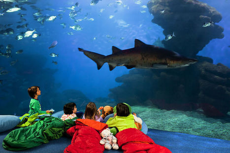 Top Attractions to Keep the Kids Entertained in Majorca   Intrepid Wanderer   Safety Tips for Throwing a Kiddie Private Pool Party   Scoop.it