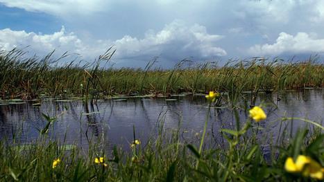 Illegal 'fracking-like' oil drilling halted in ecologically-sensitive ... | Horizontalbohrtechnik | Scoop.it