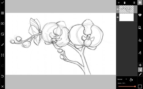 How to Draw Orchids with PicsArt | Drawing and Painting Tutorials | Scoop.it