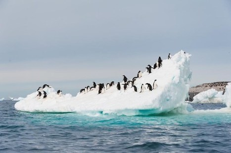 Time to map the uncharted Antarctica - Technologist   Oceans and Wildlife   Scoop.it