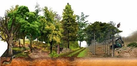 Les recommandations des associations franc-comtoises pour le développement du bois-énergie   Interprofession Forêt Bois des Pyrénées-Atlantiques   Scoop.it