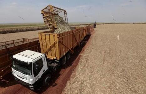 Brazil takes aim at U.S. farm subsidies as Rousseff readies visit   Grain du Coteau : News ( corn maize ethanol DDG soybean soymeal wheat livestock beef pigs canadian dollar)   Scoop.it