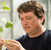 Biólogo identifica nueva vía para luchar contra enfermedades de plantas | Educación, tecnología y aprendizaje | Scoop.it