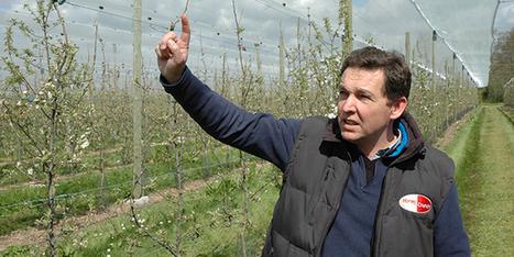 Moins de temps et d'intrants avec le mur fruitier | Arboriculture: quoi de neuf? | Scoop.it