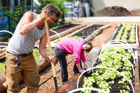 Hastings Urban Farm offers food security and connection to land | Vertical Farm - Food Factory | Scoop.it