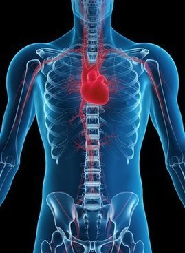 Echocardiography in Houston   Cardiac Catheterization and Stenting in Houston   Scoop.it
