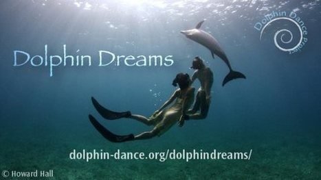 Dolphin Dreams   Ocean Minds   All about nature   Scoop.it