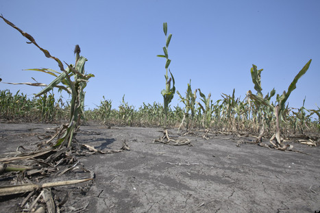 In Drought-Ravaged Plains, Efforts to Save A Vital Aquifer | Farming, Forests, Water, Fishing and Environment | Scoop.it