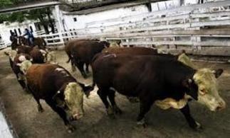 PARAGUAY: Los bancos prevén una mayor emisión de créditos ... - EntornoInteligente | Genética de Bovinos de Carne | Scoop.it