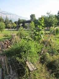 Un jardin collectif en danger sur le campus de Grenoble | Les colocs du jardin | Scoop.it