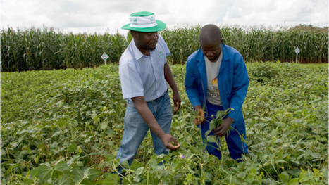 How Africa can help feed the world's 9 billion people in 2050 | Devex | Transformation of African Economies | Scoop.it