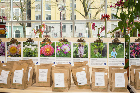It's Summer Bulb Season at the Newly Renovated Amsterdam Tulip Museum ... - PR Web (press release) | Full Fridge Free Guide to Amsterdam | Scoop.it