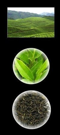 Green tea catechins prevent obesity | Health Facts | Scoop.it