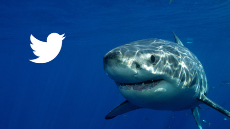 Australian Sharks Will Now Be tweeting their Locations | Technology in Business Today | Scoop.it