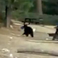 Possibly tech-savvy bear walks off with an iPad | Pet Sitter Picks | Scoop.it
