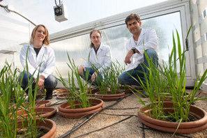 La Facultad de Ciencias (Universidad de Navarra) recibe a dos investigadores brasileños | Facultad de Ciencias (UNAV) | Scoop.it